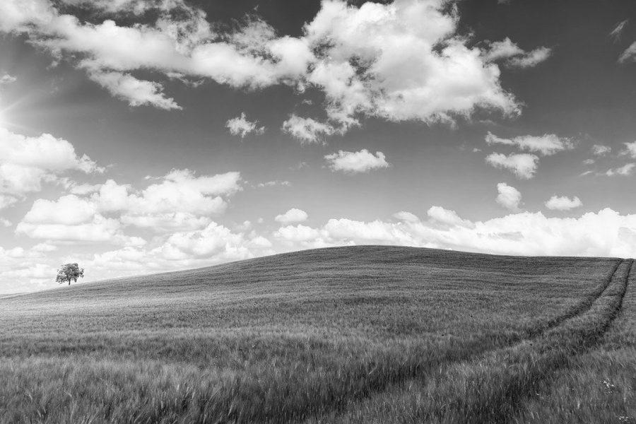 field bw